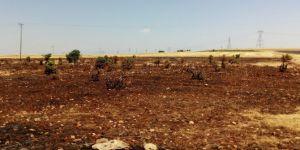 Hilvan'da üzüm bağı ve fıstık ağaçları yandı
