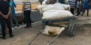 Nusaybin'de at arabası ile motosiklet çarpıştı