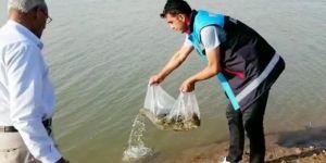 Kurtalan'ın Ekinli göletine 60 bin yavru pullu sazan balığı bırakıldı