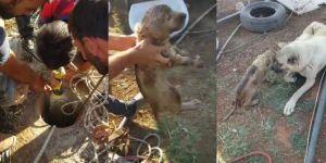 Kızıltepe'de kuyuya düşen yavru köpek kurtarıldı