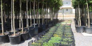 Bağlar Belediyesinden organik tarım hamlesi