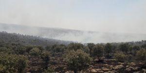Bagok Dağındaki yangın kontrol altına alındı