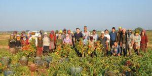 Mevsimlik işçilere tarlada Kaymakam ziyareti