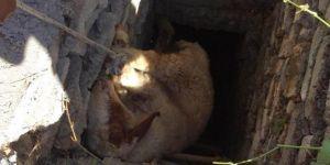 Midyat'ta kuyuya düşen hayvanlar kurtarıldı
