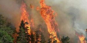 Seyitgazi'deki orman yangını kontrol altına alındı