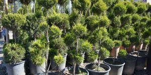 Tarım Bakanlığı ağaç dikme rekor hedefini açıkladı
