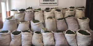 Police seize more than a million roots of hemp and 974 kilos of marijuana