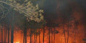 Bodrum'daki yangın yerleşim yerlerini tehdit ediyor