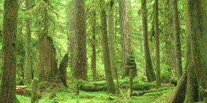 Ormanların korunması için birlikte hareket edilmelidir