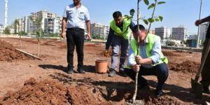 Diyarbakır Bağlar Belediyesi yaşam sitelerine meyve ağacı zorunluluğu getiriyor