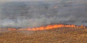 Anız yangını hem doğaya hem de canlılara zarar veriyor