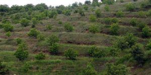 14 milyon fidan toprakla buluşturuldu