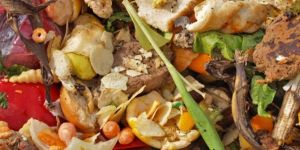 26 million tons of food is wasted annually in Turkey
