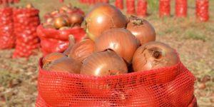 Çınarlı çiftçiler soğan fiyatlarından memnun değil
