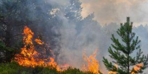 Alanya'da orman yangını