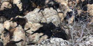 Bitlis'te 315 koyun uçurumdan düşerek telef oldu