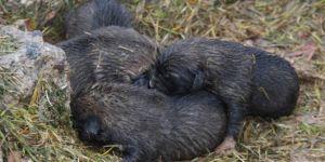 Yavru köpeklerin yağmur ve soğukta yaşam mücadelesi