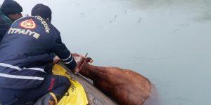 Nusaybin'de sulama kanalına düşen inek kurtarıldı