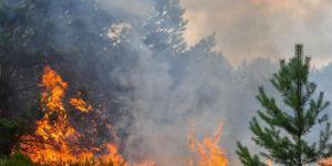 Uludağ Erikli Yaylası'nda orman yangını