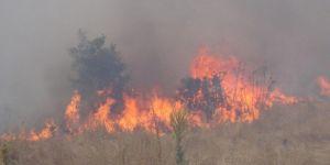 Trabzon'un 11 ilçesinde örtü yangınları