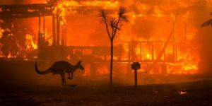 Avustralya'daki yangında 480 milyon hayvan telef oldu