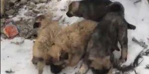 Ağrı'da su kuyusuna düşen yavru köpekler kurtarıldı