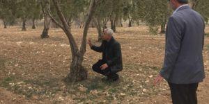 Uzmanlar meyve ağaçlarının hastalıklara karşı ilaçlanması konusunda uyardı