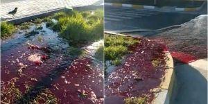 Elazığ-Bingöl yol ayrımında tıkanan rögar nedeniyle mezbahane kanı yola akıyor