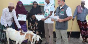 Süt keçileri Afrika'da kalıcı geçim kaynağı oluyor