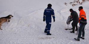 Bitlis'te hayvanlar için doğaya bir ton yem bırakıldı