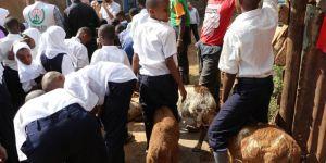 Avrupa Yetim Eli Uganda'da vekâlet kurbanlarını kesti