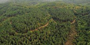Akdeniz ormanları dünya genelinde en iyi 5 proje arasına girdi