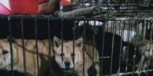Çinliler yine ibret almadı: Yarasa ve köpek pazarı yeniden açıldı!