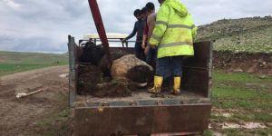 Diyarbakır'da sele kapılan hayvanlar belediye ekiplerince kurtarıldı
