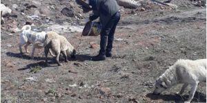 Bitlis'te sokak hayvanları için yiyecek ve mama bırakıldı