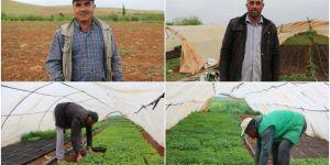 Tarım işçileri hem oruç tutuyor hem tarlada çalışıyor