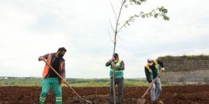 Diyarbakır Büyükşehir Belediyesinden çim biçme ve yeşillendirme çalışması
