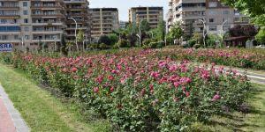 Diyarbakır'ın gül bahçesi renk cümbüşü ve mis kokusu yayıyor