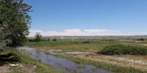Bismil'de Sinan köylüsünün ekini Ilısu Baraj sularının altında kaldı