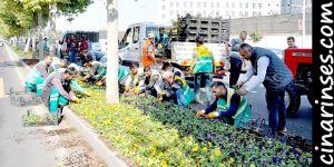 Diyarbakır Büyükşehir Belediyesi mevsimlik çiçekle kenti süsledi