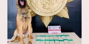 Yüksekova'da uyuşturucu operasyonunda bir kişi gözaltına alındı