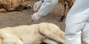 Diyarbakır'da kuduz aşılama kampanyası gerçekleştirildi