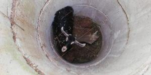 Nusaybin'de kuyuya düşerek mahsur kalan keçi kurtarıldı