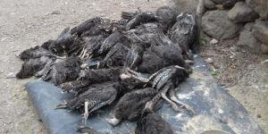 Siverek'te hatalı ilaç kullanımından dolayı 500 hindinin telef olduğu iddia edildi
