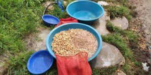 Elazığ'da salep soğanı toplayan 3 kişiye para cezası verildi
