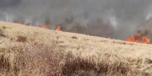 Çıkan yangında 132 dönüm buğday tarlası yandı