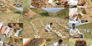 Yüksek rakımlı yaylalarda ürettiği ana arıları Türkiye'nin dört bir yanına gönderiyor