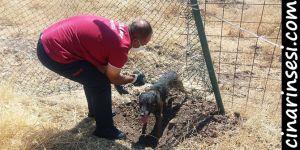 Diyarbakır Üçkuyu'da mahsur kalan köpeği itfaiye ekipleri kurtardı