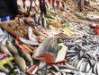 Kocaeli'de balık pazarı canlandı