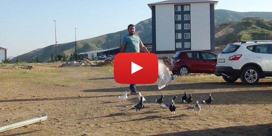 Dünyanın en hızlı güvercin ırkını hobi olarak yetiştiriyor